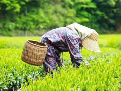XKLĐ ngành nông nghiệp tại Nhật Bản gồm có những công việc gì?